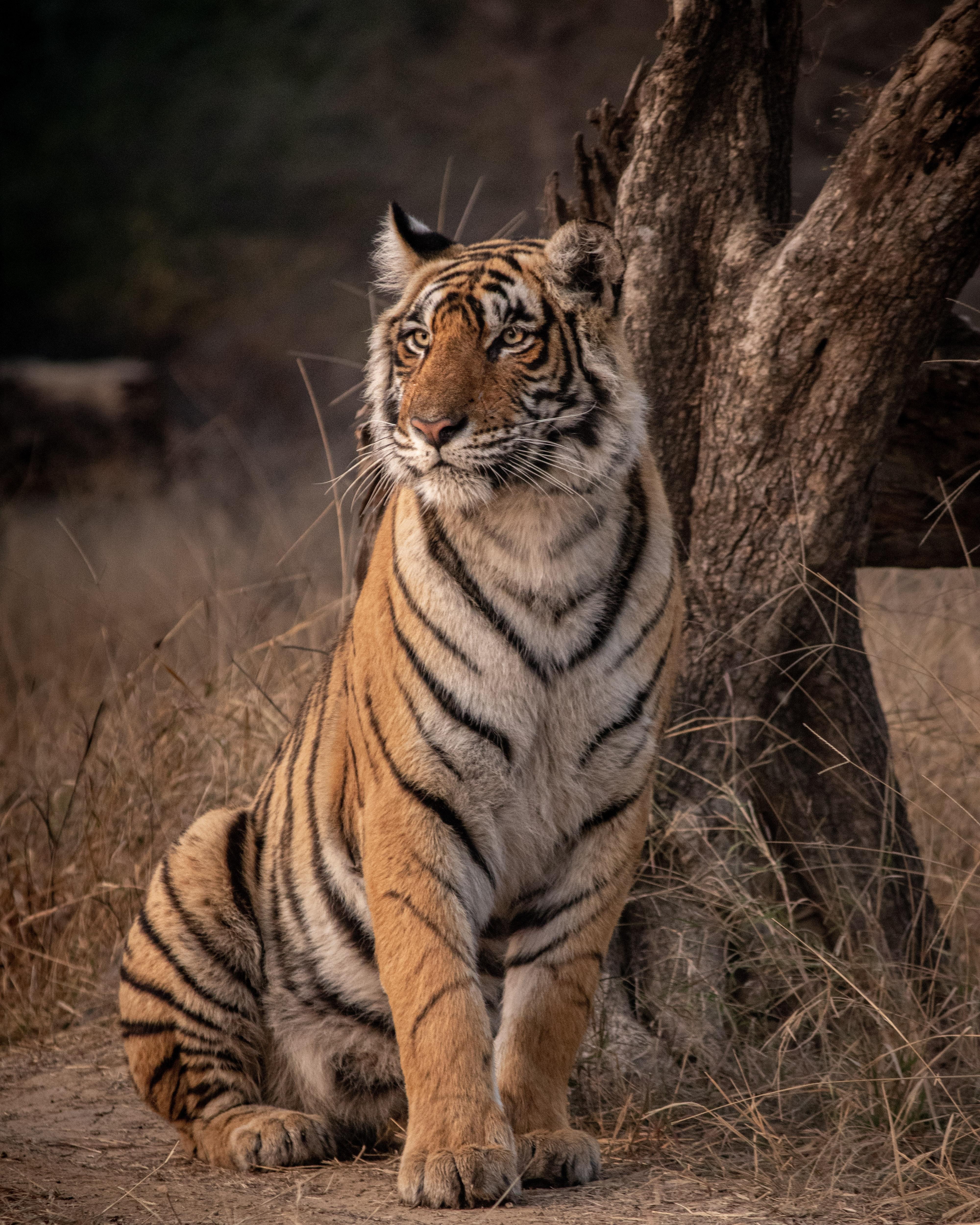 Taj Tour + Tiger Safari 5