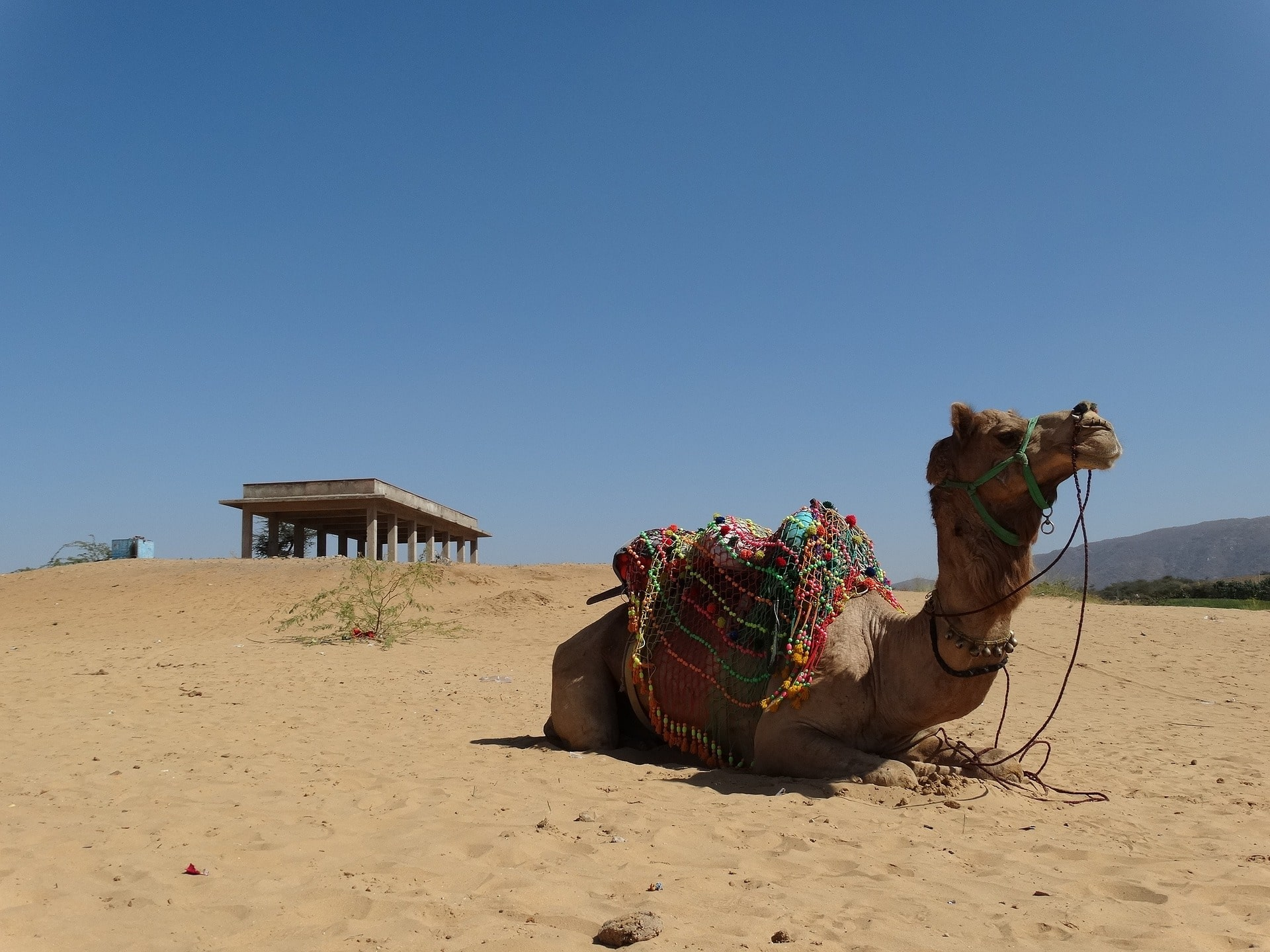 Pushkar Camel Fair with Rajasthan Tour 2