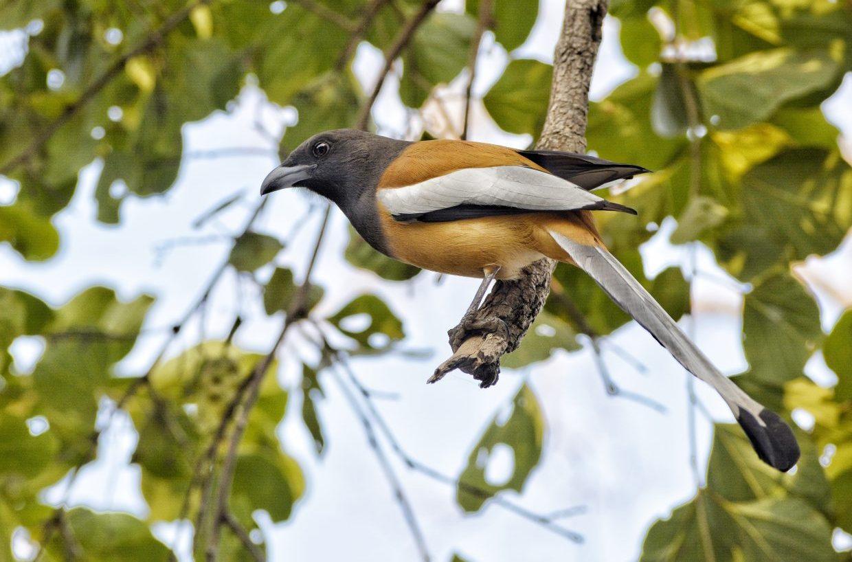 Rajasthan Wildlife Tour 9