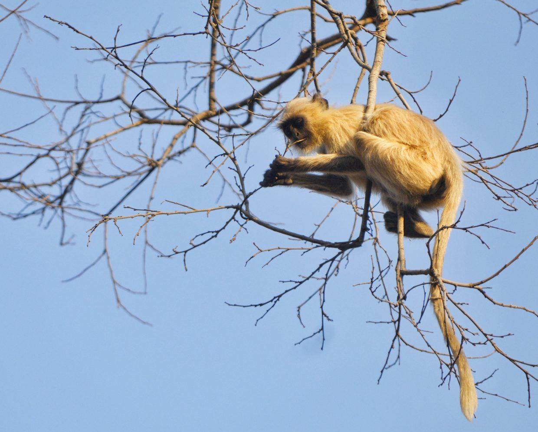 India Wildlife Tour 2
