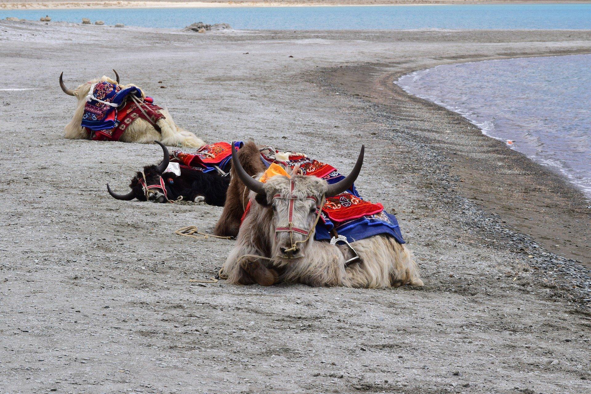 Ladakh India Tour 7