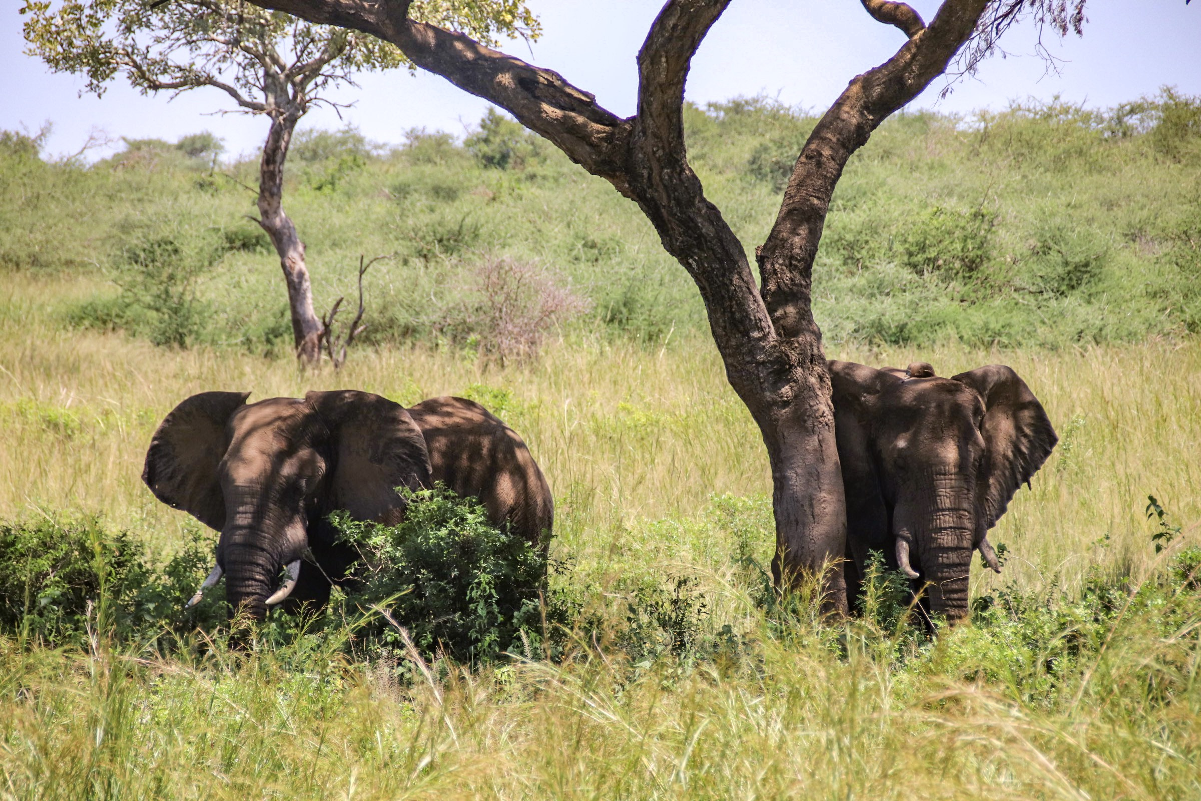 14-Day Trip - Exploring and Experiencing the Pearl of Africa Uganda 1