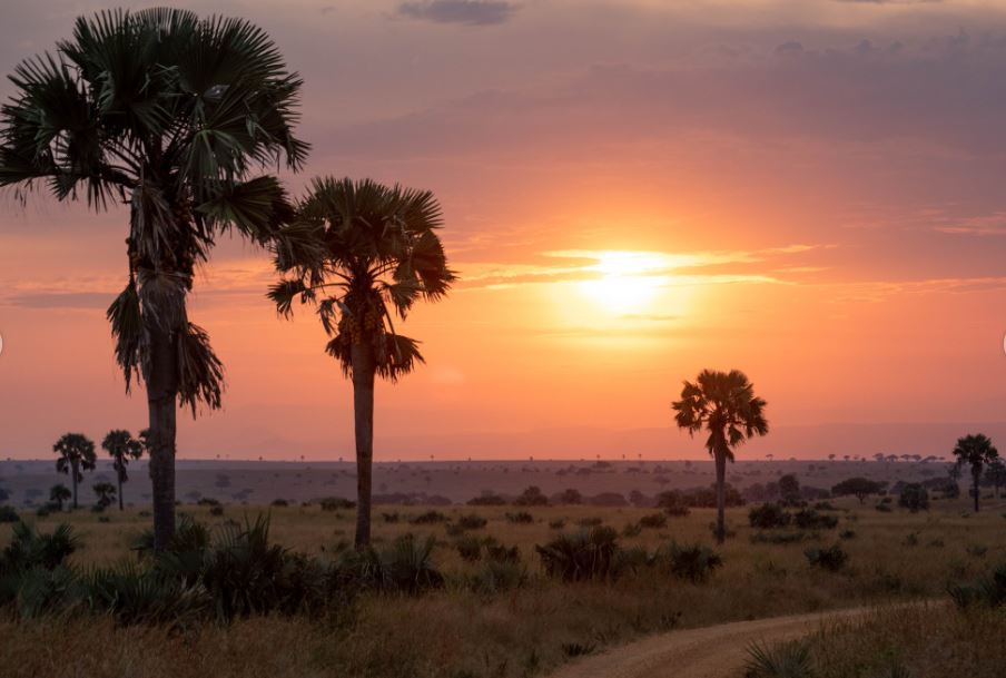 14-Day Trip - Exploring and Experiencing the Pearl of Africa Uganda 6