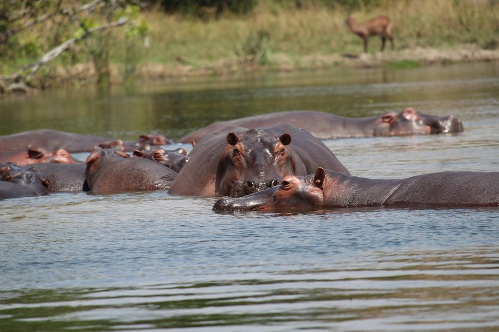 14-Day Trip - Exploring and Experiencing the Pearl of Africa Uganda 7