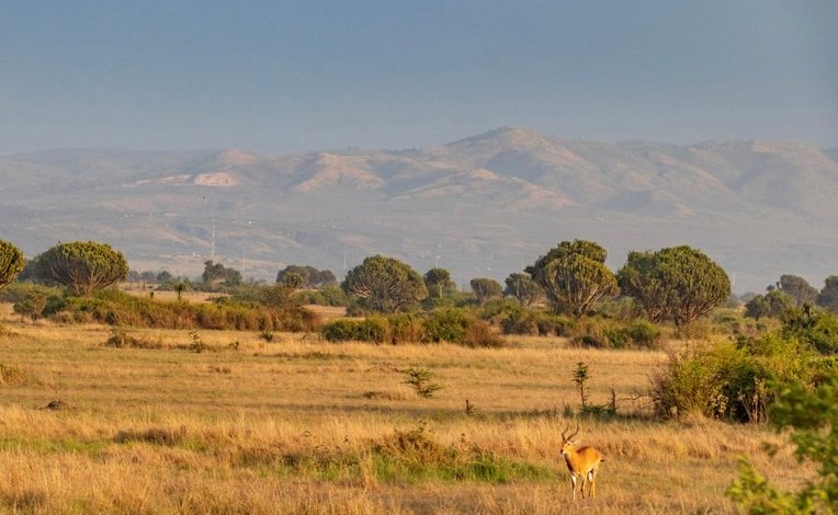 14-Day Trip - Exploring and Experiencing the Pearl of Africa Uganda 8