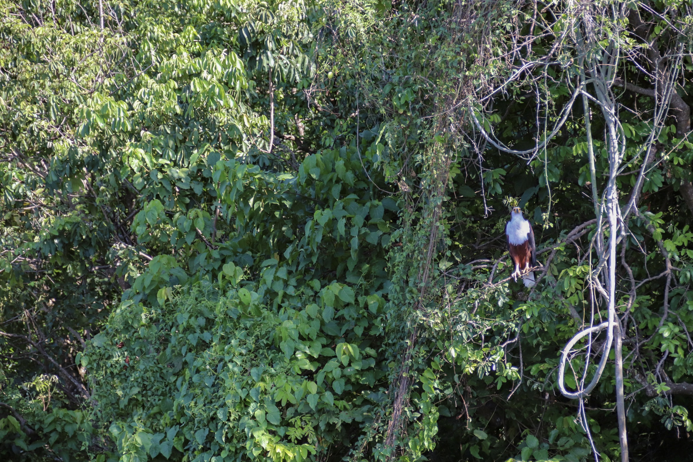 11-Day Primates and Birding Safaris in Uganda - The Pearl of Africa 9