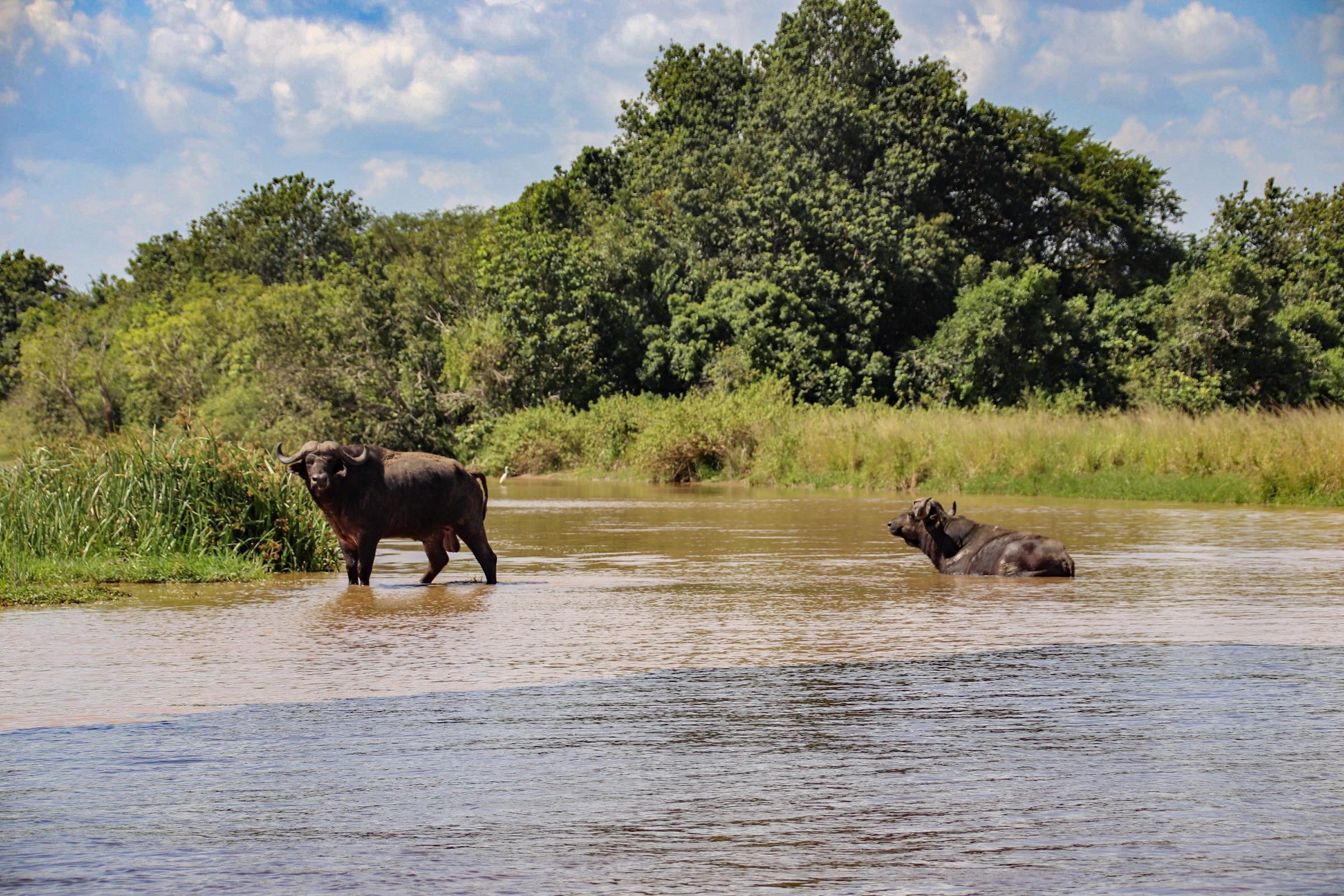 10-Day Wildlife Big 5, Murchison Falls, and Gorilla Trekking Safaris in Uganda 8