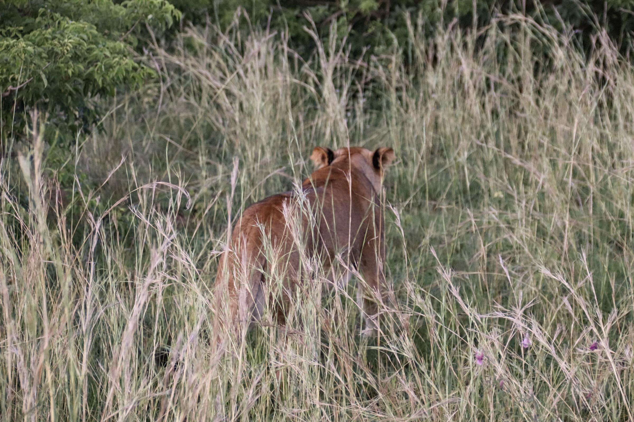 9-Day Safari Wildlife Tour Including Chimp, Gorilla Trekking 2