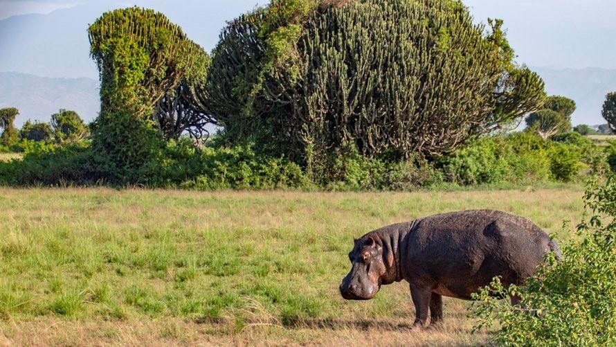10-Day Wildlife Big 5, Murchison Falls, and Gorilla Trekking Safaris in Uganda 4