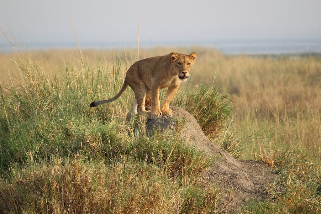 12-Day Trip Including Gorilla Trekking, Big 5 and Nature Sighting 7