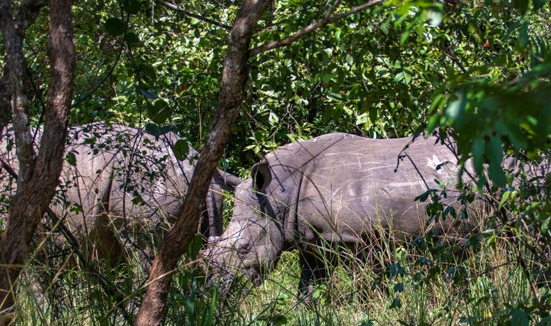 12-Day Trip Including Gorilla Trekking, Big 5 and Nature Sighting 6