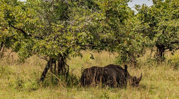 10-Day Wildlife Big 5, Murchison Falls, and Gorilla Trekking Safaris in Uganda 3