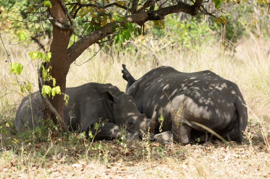 9-Day Safari Wildlife Tour Including Chimp, Gorilla Trekking 3