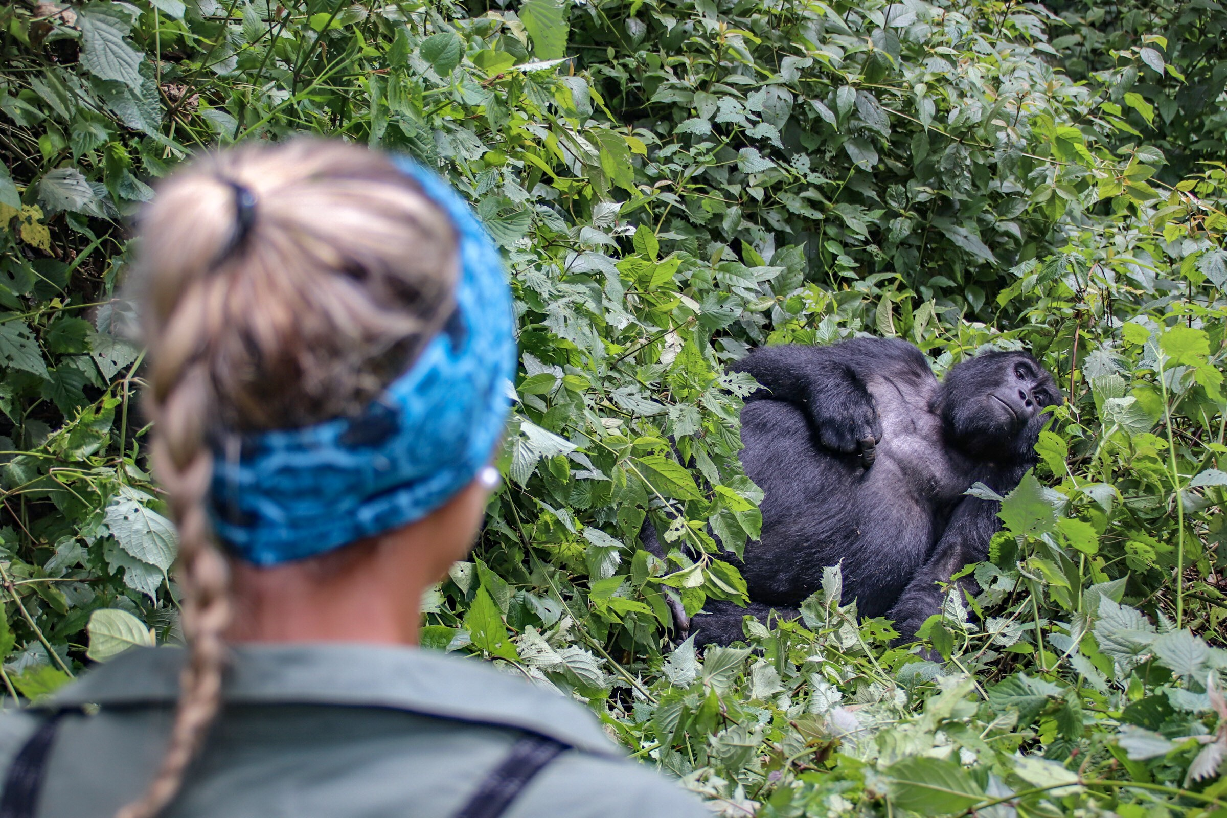 4-Day Pearl of Africa Trip Including Gorilla Trekking Tour 4