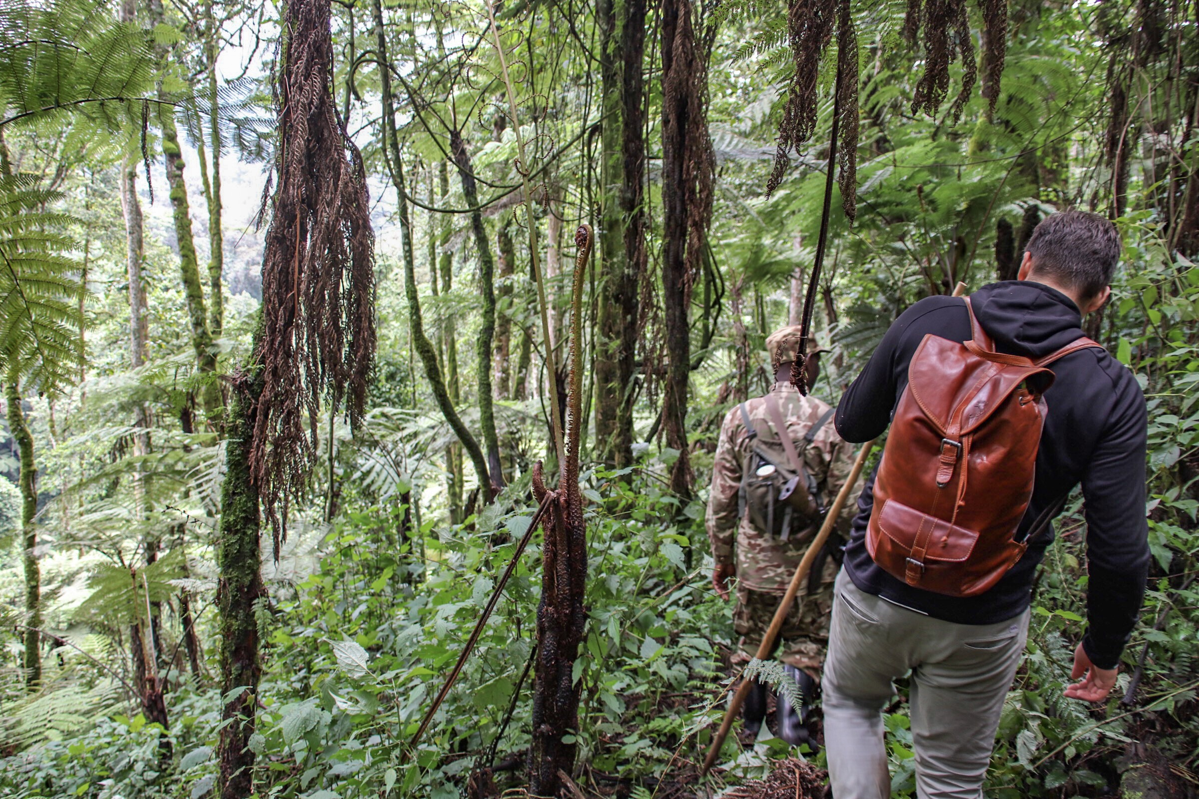 4-Day Pearl of Africa Trip Including Gorilla Trekking Tour 3