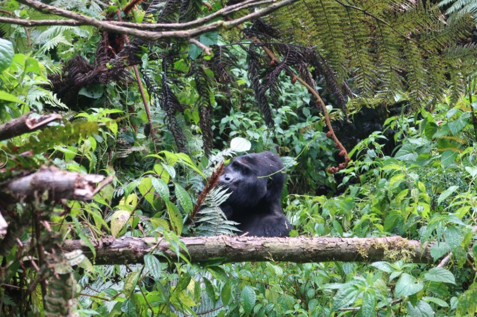 4-Day Pearl of Africa Trip Including Gorilla Trekking Tour 1