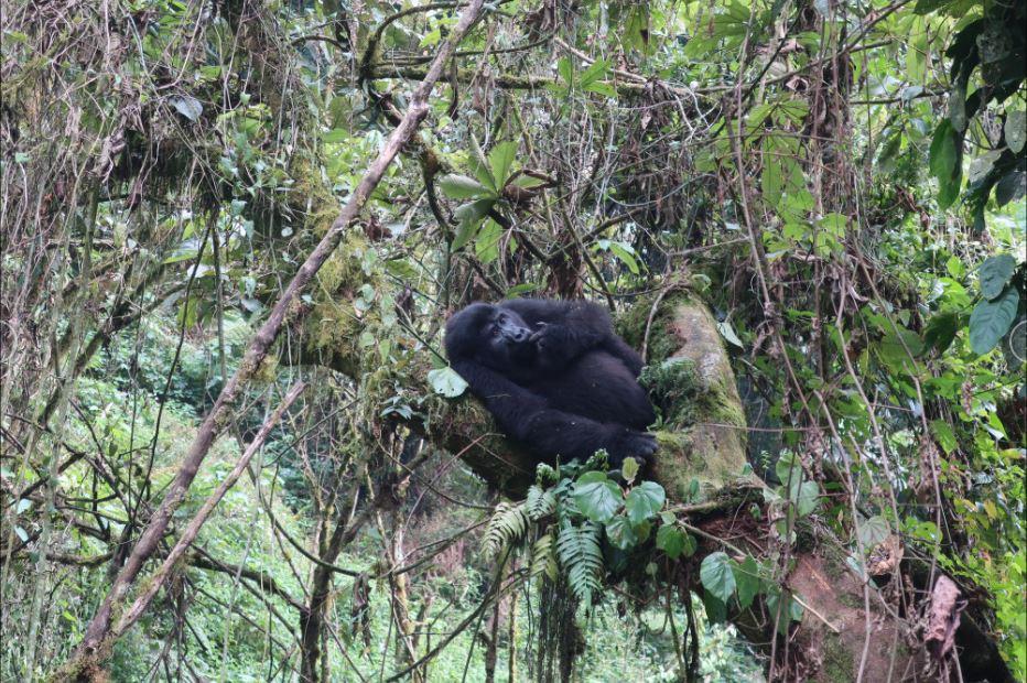 9-Day Safari Wildlife Tour Including Chimp, Gorilla Trekking 9