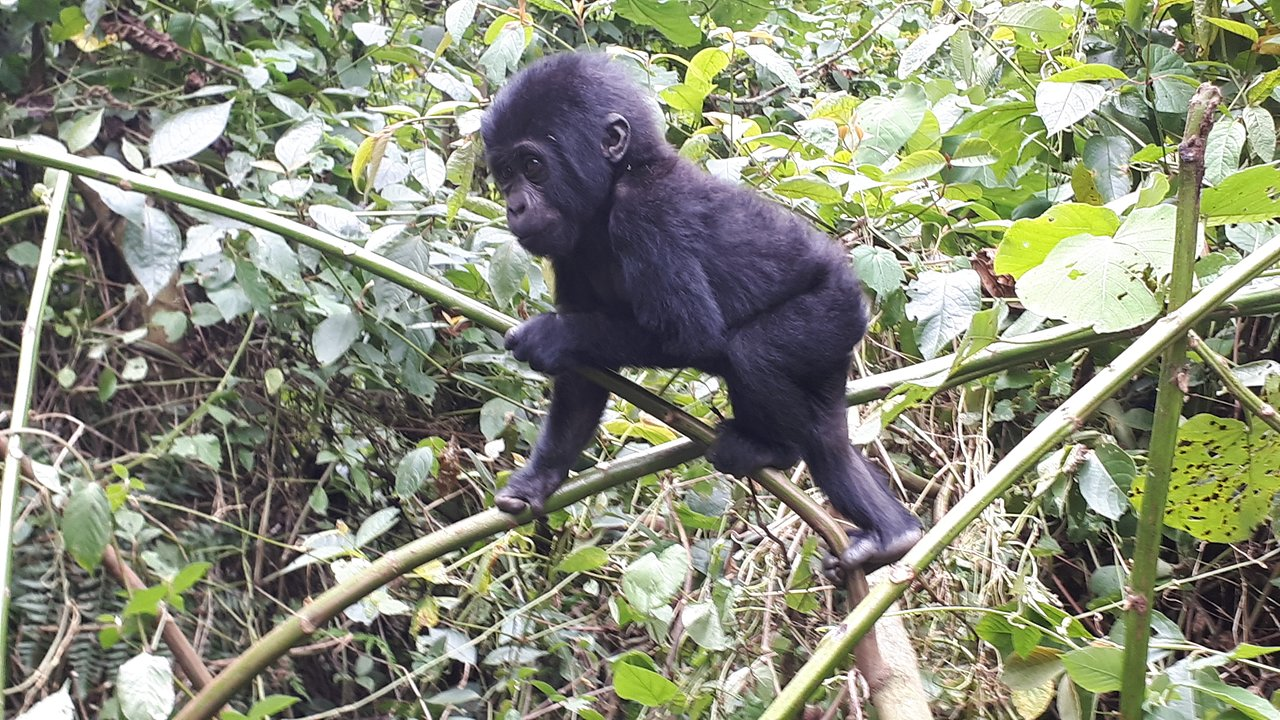 4-Day Pearl of Africa Trip Including Gorilla Trekking Tour 5