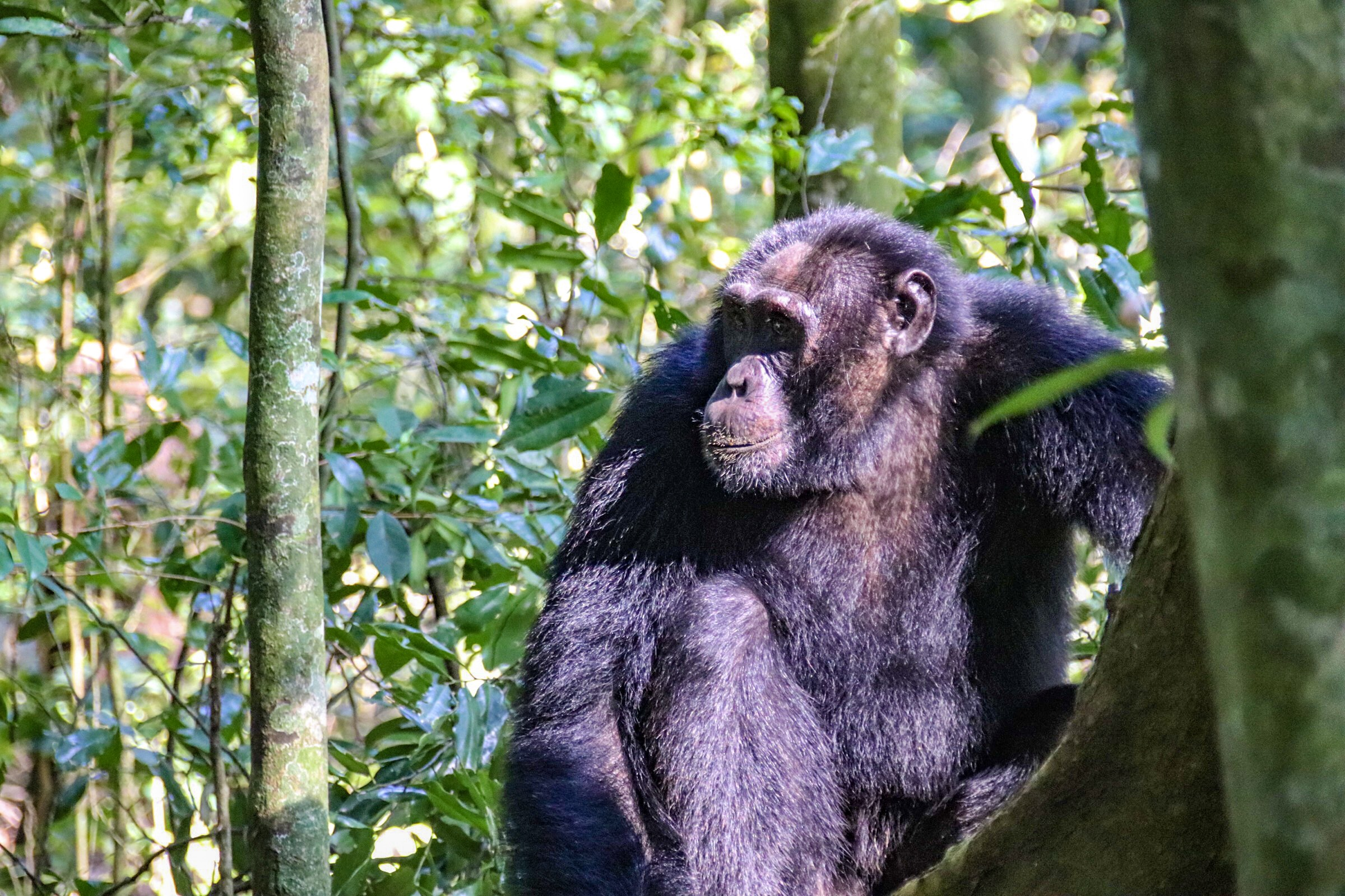 11-Day Primates and Birding Safaris in Uganda - The Pearl of Africa 2