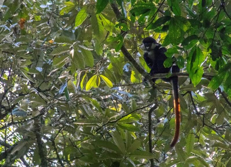 11-Day Primates and Birding Safaris in Uganda - The Pearl of Africa 1