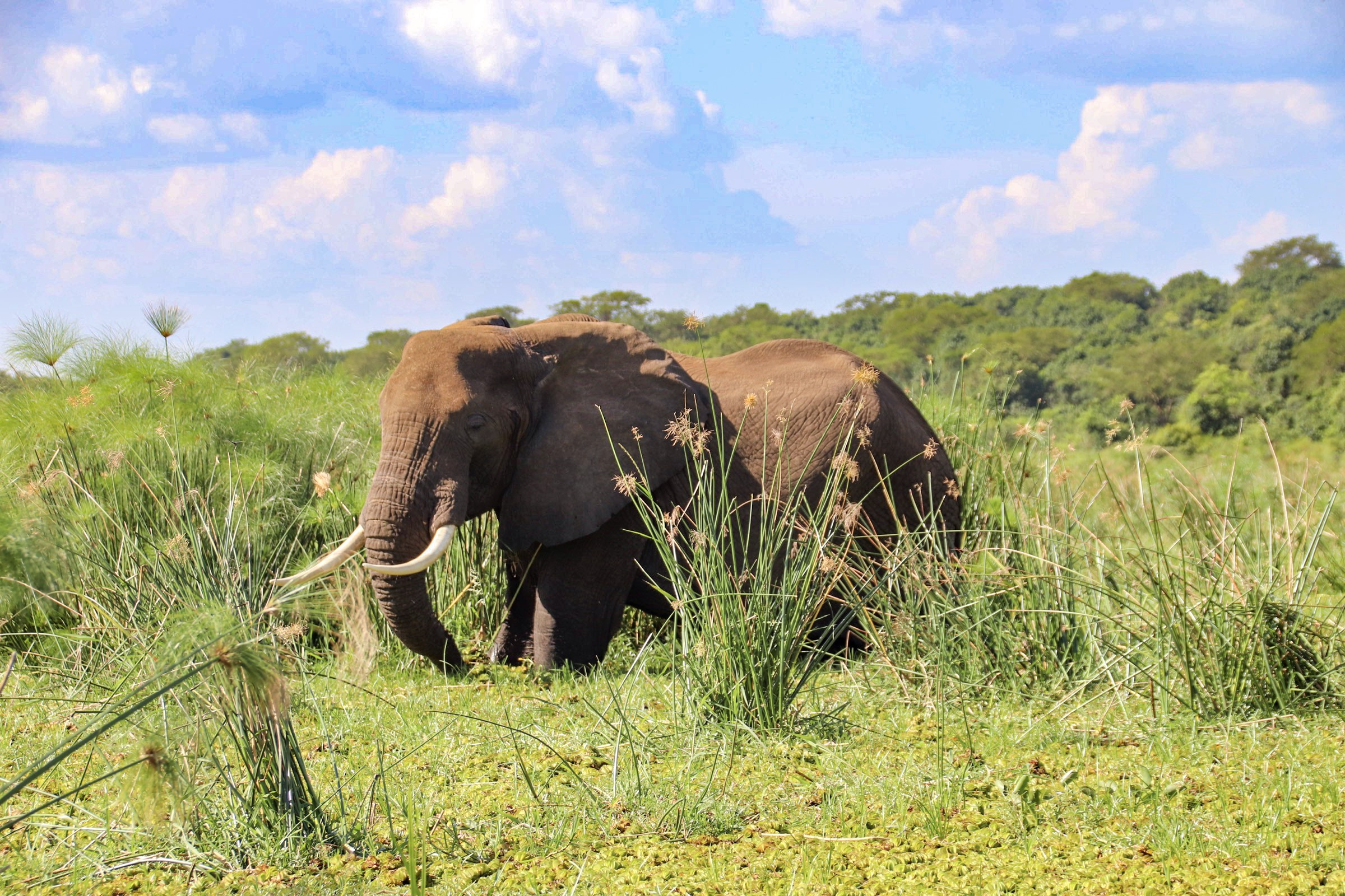 12-Day Trip Including Gorilla Trekking, Big 5 and Nature Sighting 2