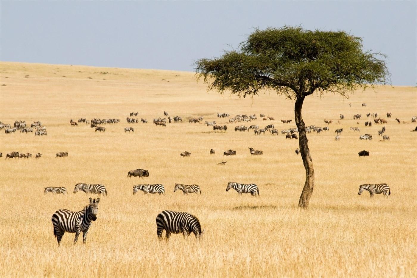 8-Day Trip to Kenya - Exploring Game Reserves, Big 5 Sighting 1