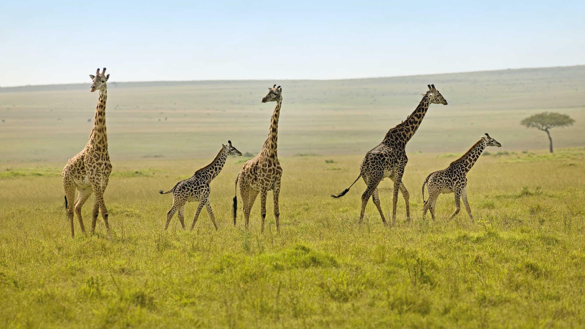 8-Day Trip to Kenya - Exploring Game Reserves, Big 5 Sighting 9