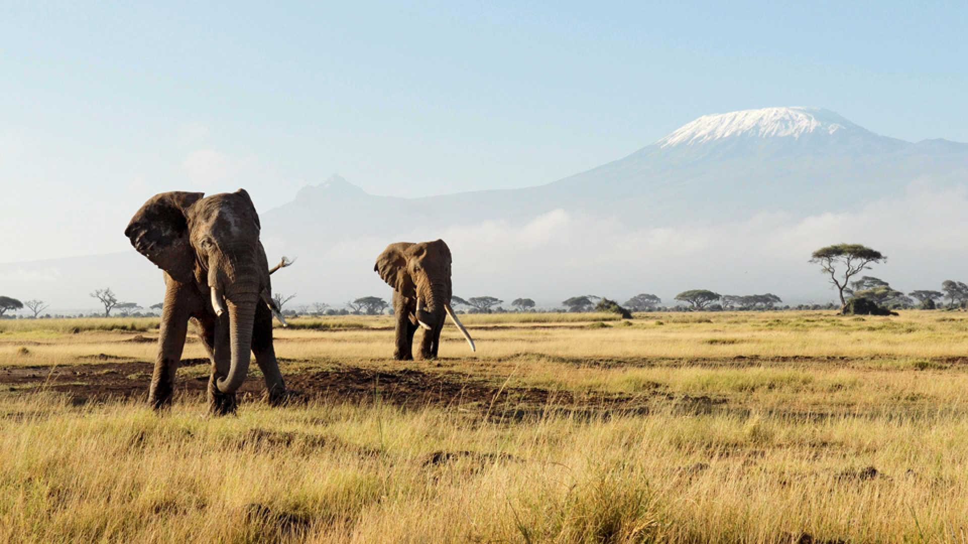 8-Day Trip to Kenya - Exploring Game Reserves, Big 5 Sighting 6
