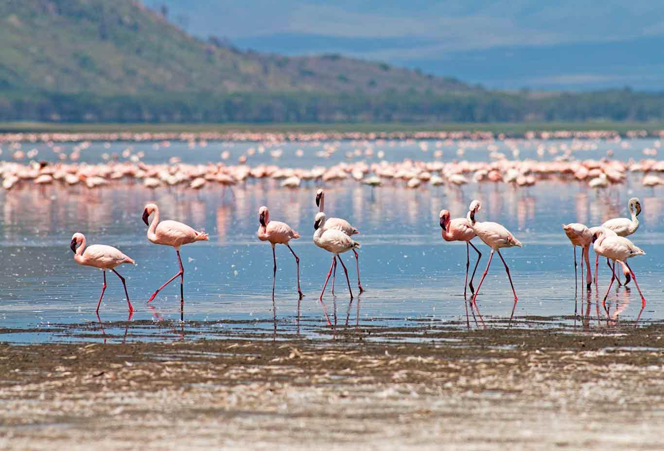 8-Day Trip to Kenya - Exploring Game Reserves, Big 5 Sighting 3