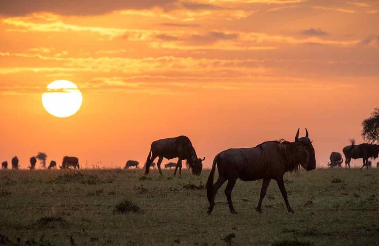 8-Day Trip to Kenya - Exploring Game Reserves, Big 5 Sighting 2