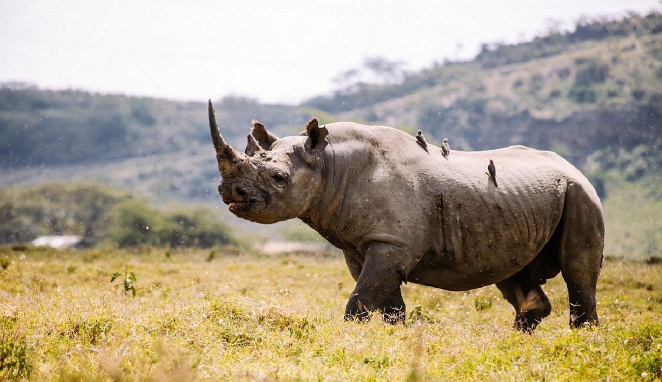 8-Day Trip to Kenya - Exploring Game Reserves, Big 5 Sighting 10