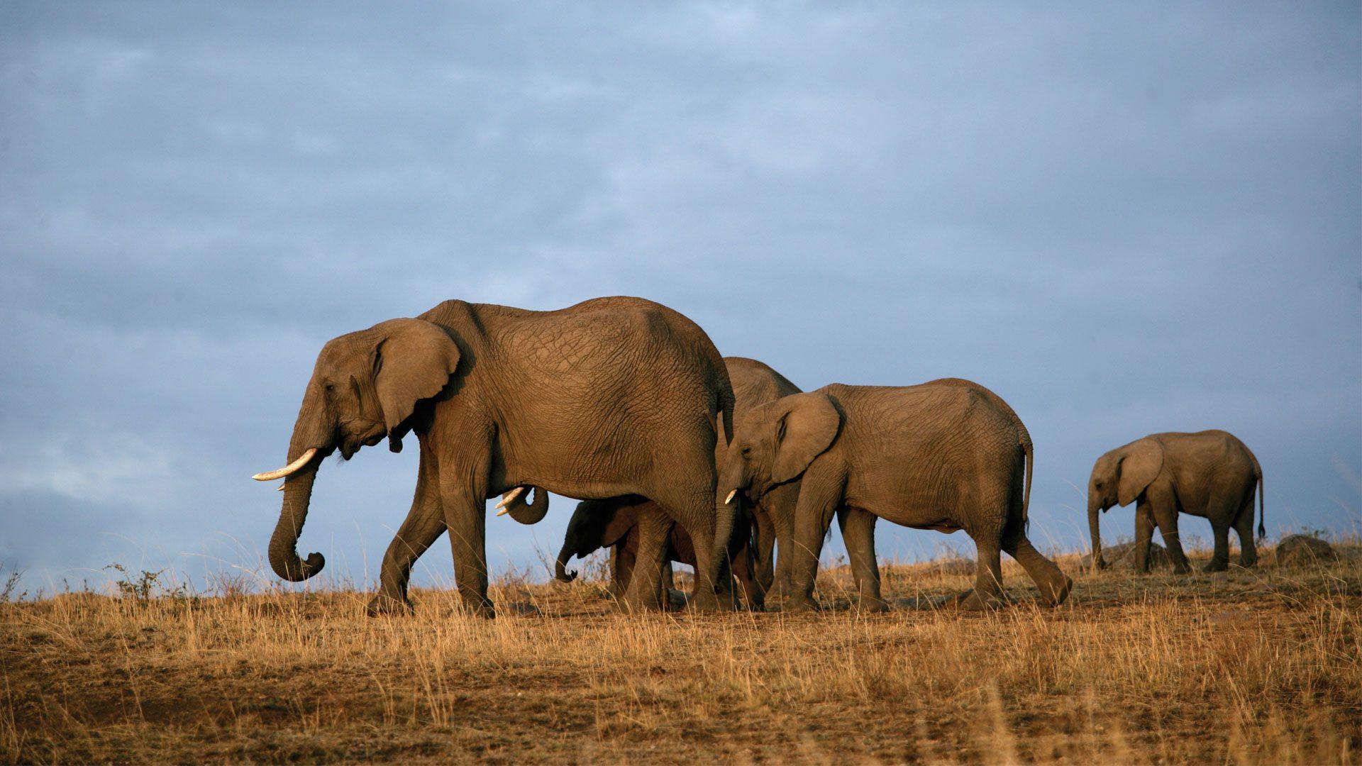 8-Day Trip to Kenya - Exploring Game Reserves, Big 5 Sighting 7